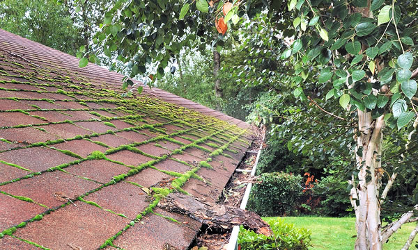 Dirty Roof Cleaning in Long Island New York.